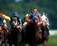 Horse Racing in Saratoga Springs, NY