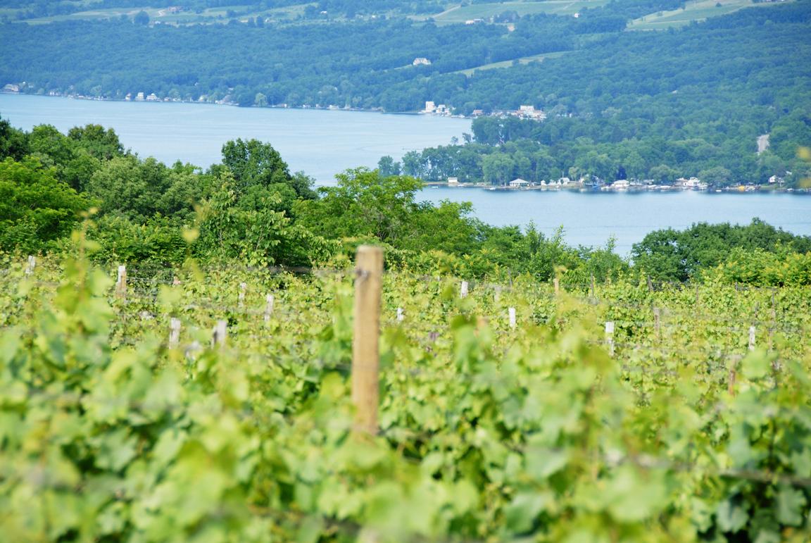 Wineries, Breweries, & Distilleries of Lake George